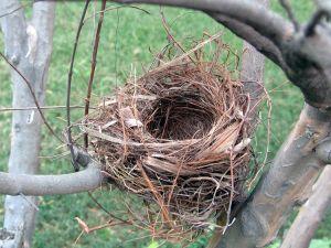 empty-nest-356878-m