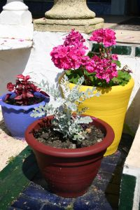 flowers-and-plants-498597-m